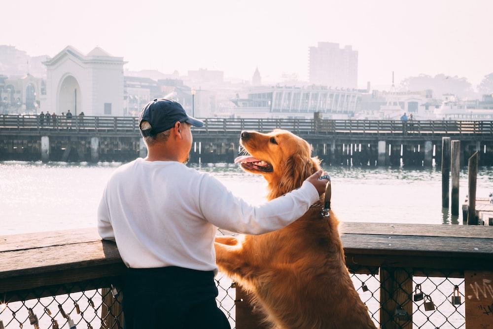 man standing near Golden Labrador retriever viewing bridge and high-rise buildings