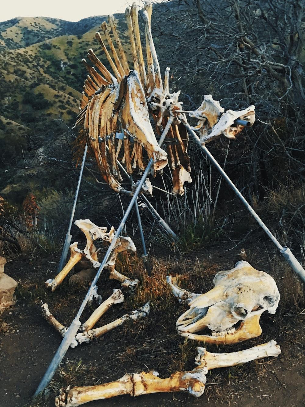 bone lot