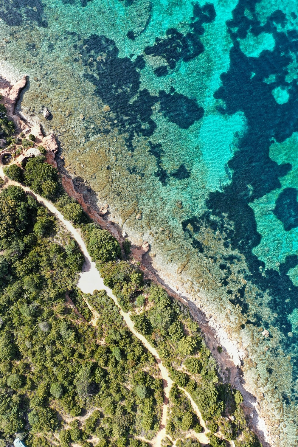 aerial photography of green trees beside seashore