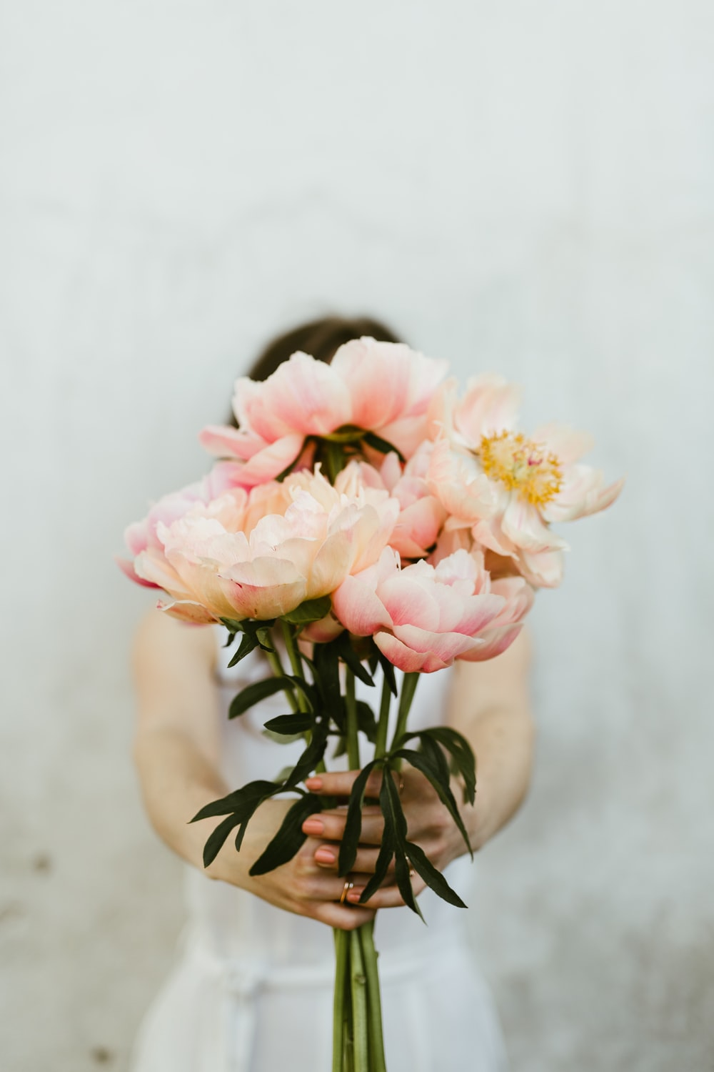 person showing pink roser flowers