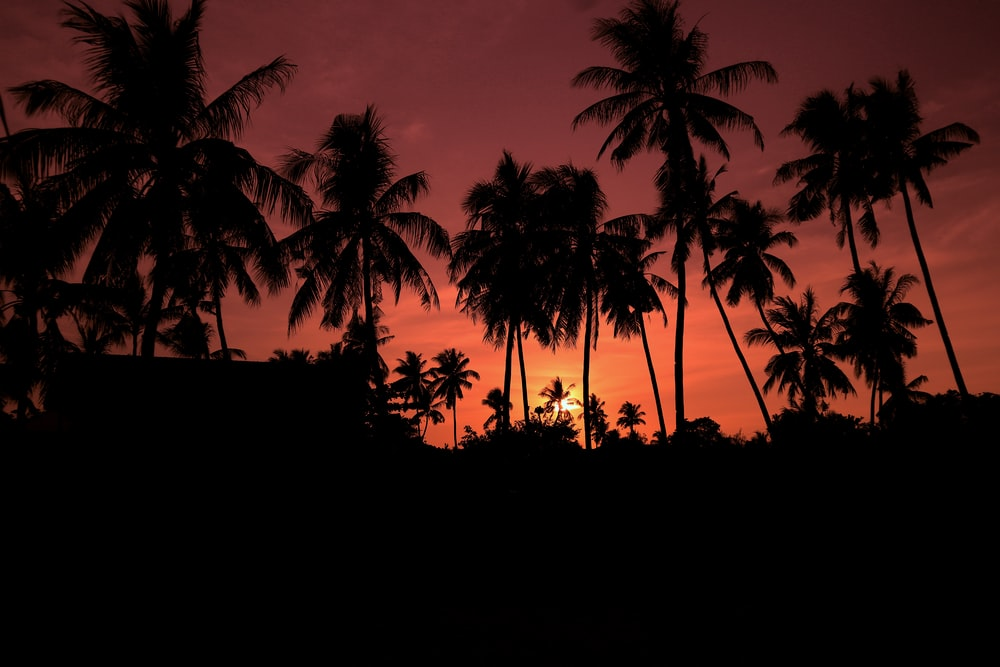 silhouette of tall coconut trees under orange sky at dusk