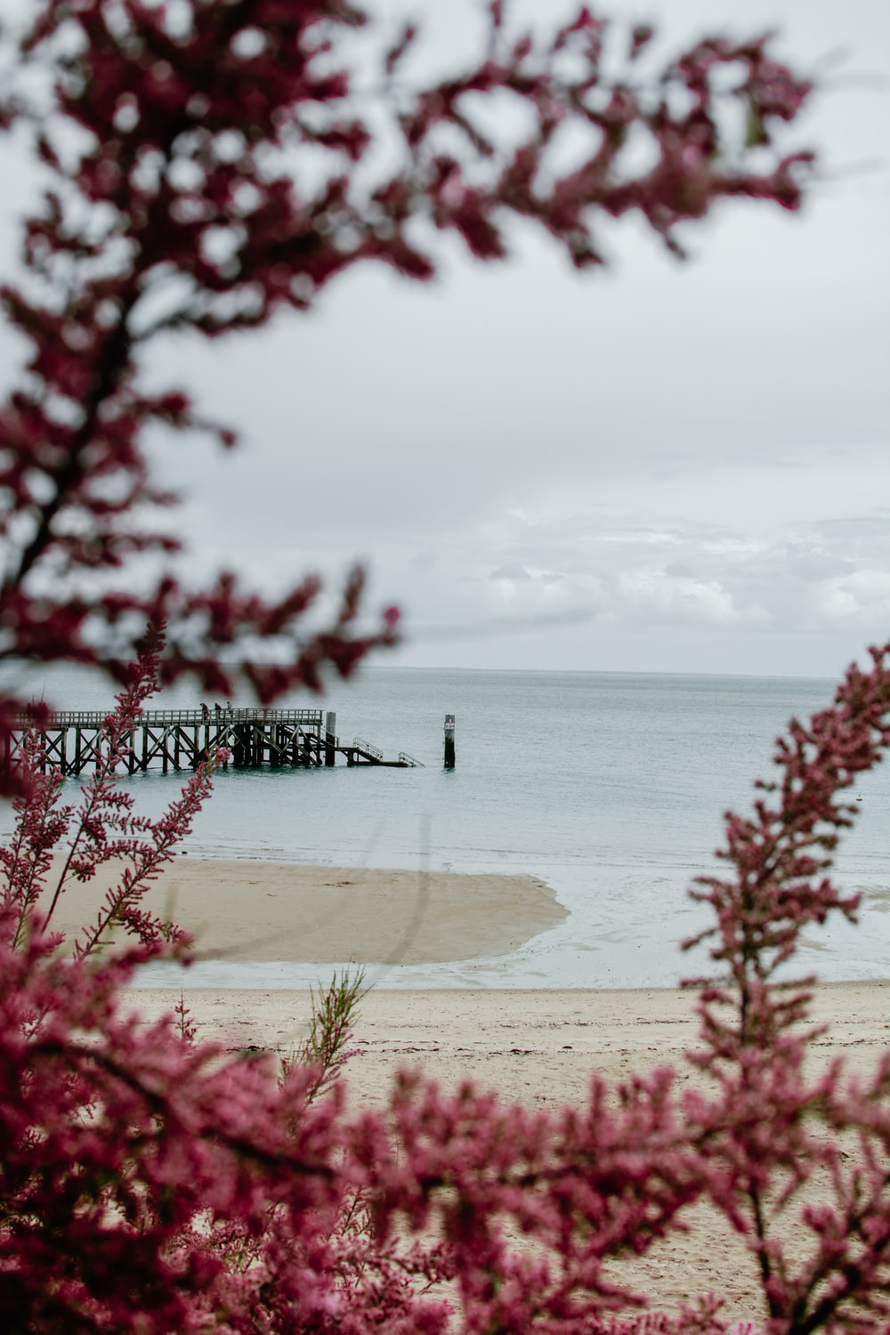 red flower buds and dock at distance on shore