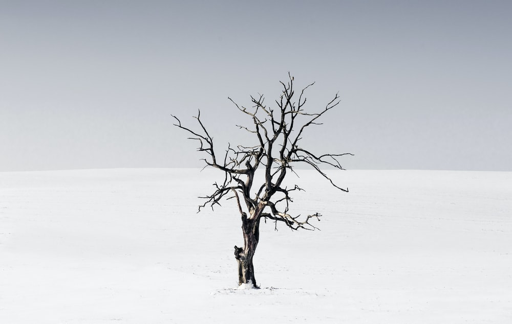 bare tree in the middle of snow