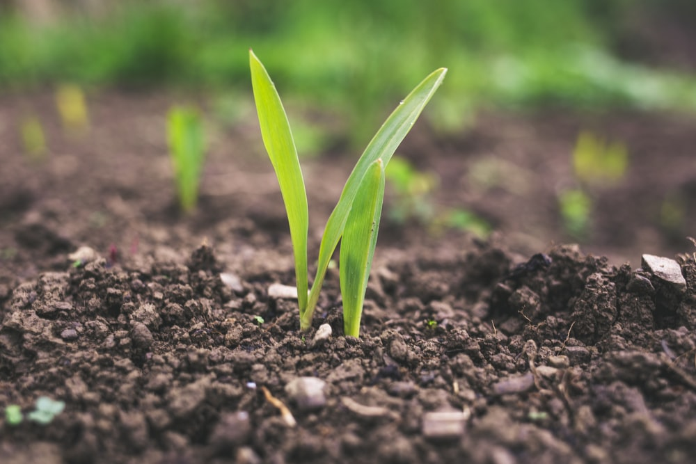 Agriculture Student Internships