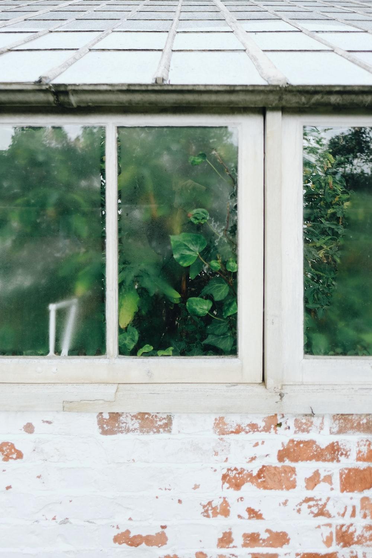 green plants on window