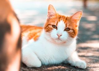 orange tabby cat on ground