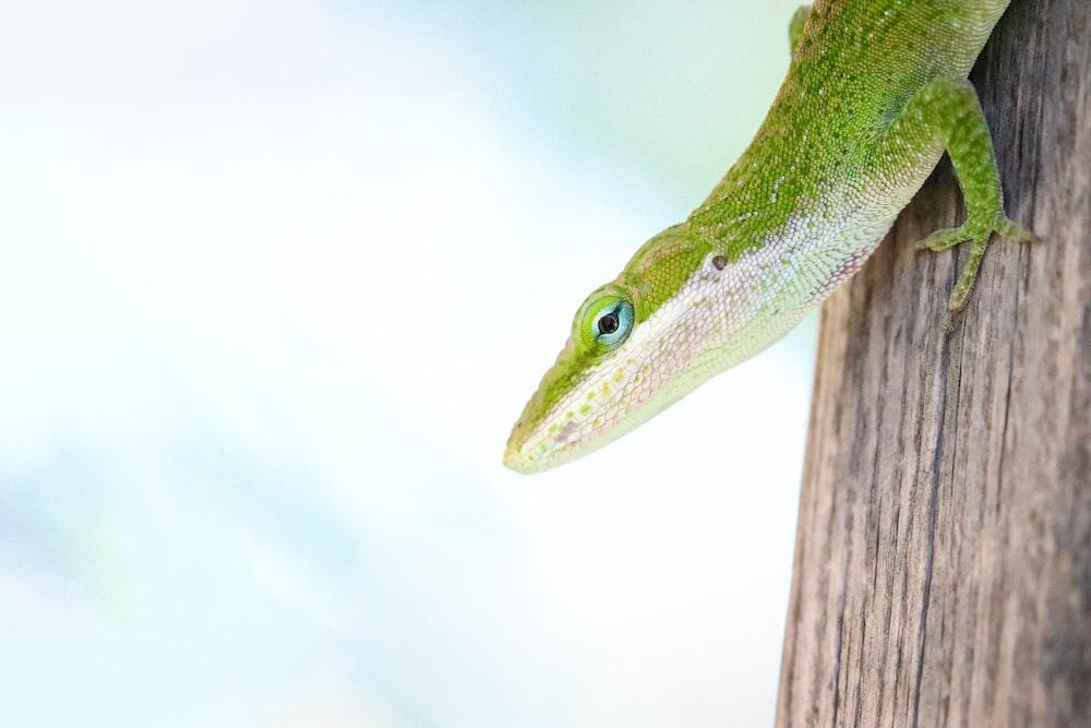 shallow focus photo of green lizard