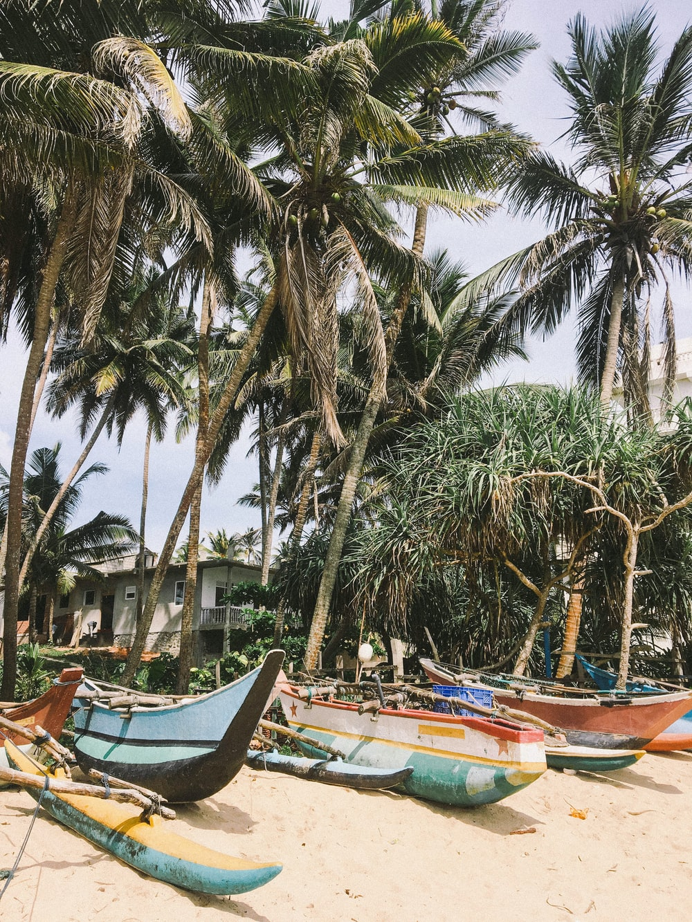 boats under coconut trees