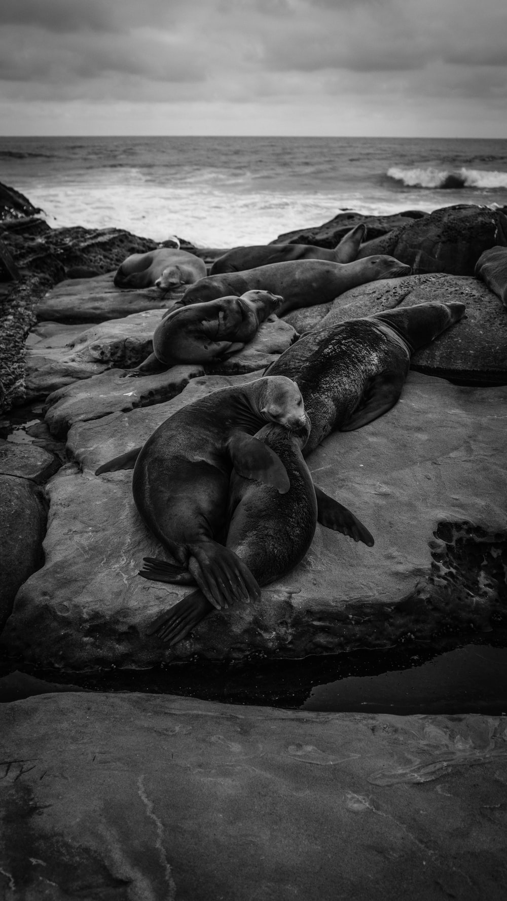 grayscale photo of seal on rocks