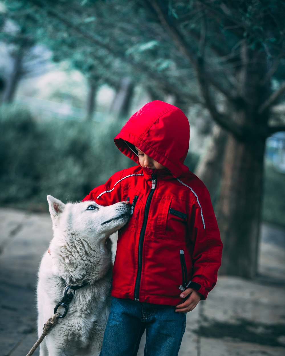 boy standing beside the husky dog
