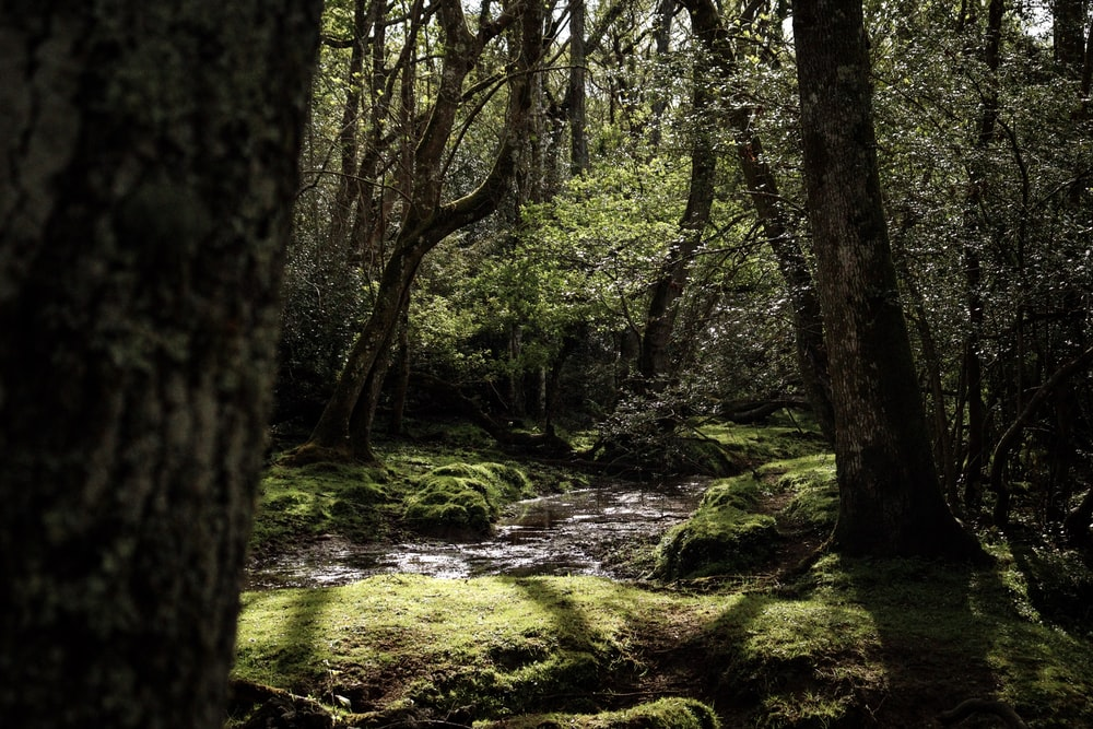 landscape photography of forest during daytime