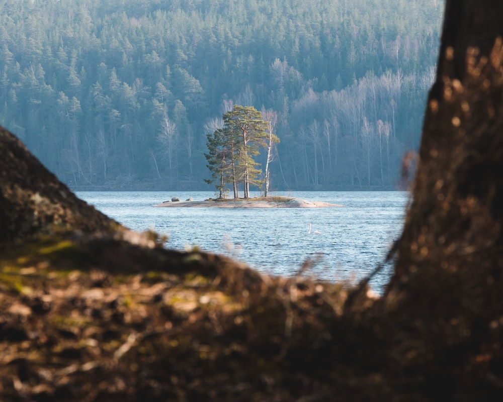 trees in middle of lake