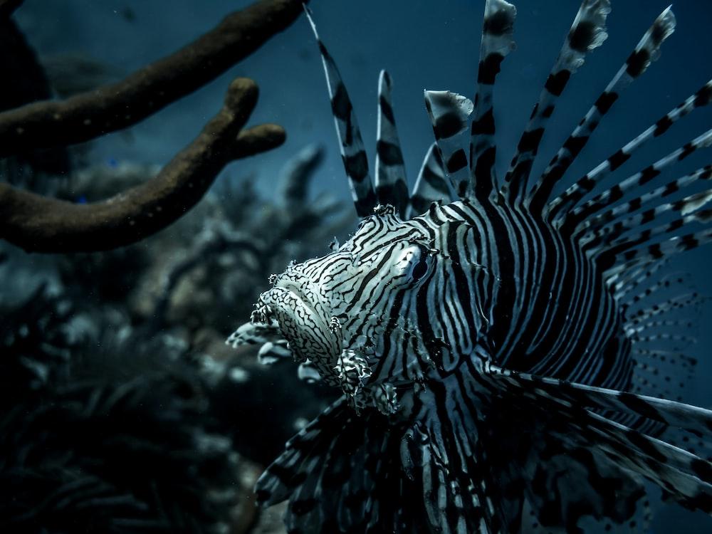 black and white stripe sea creature