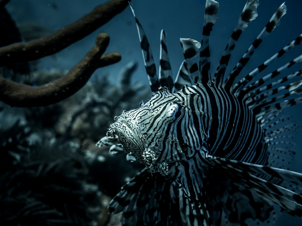 black and white stripe sea creature