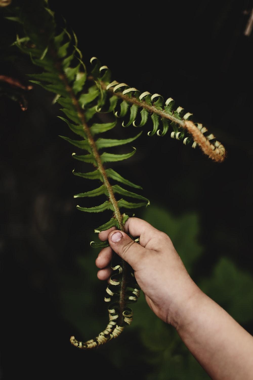 green ferns ]