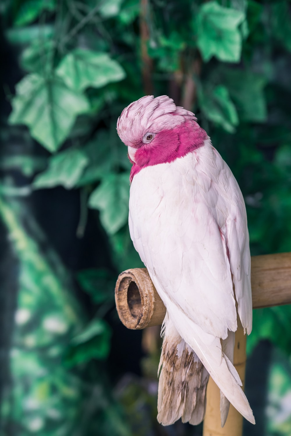 pink and white bird on bamboo