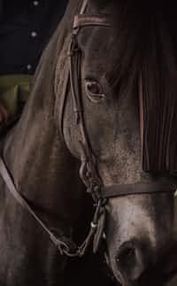 Run like the horses  horses stories