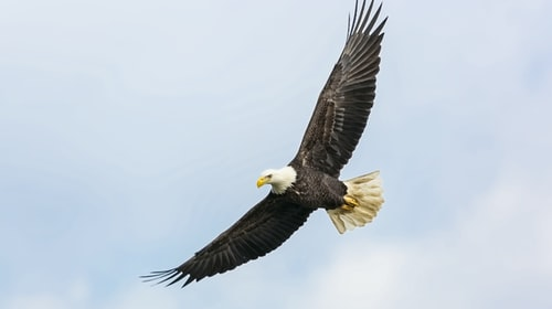 The 6 Eagles Attitudes You Must Have to Achieve YourGoals