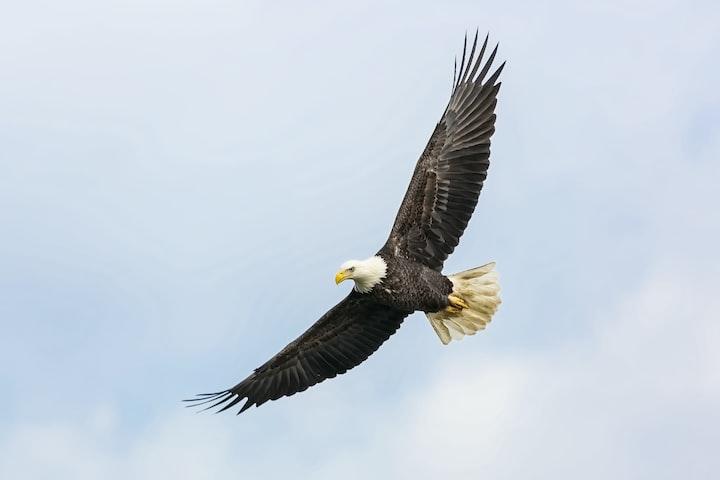 Where The Eagles Bathe
