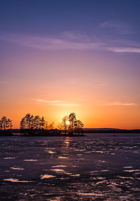 silhouette of trees near sea under orange skies
