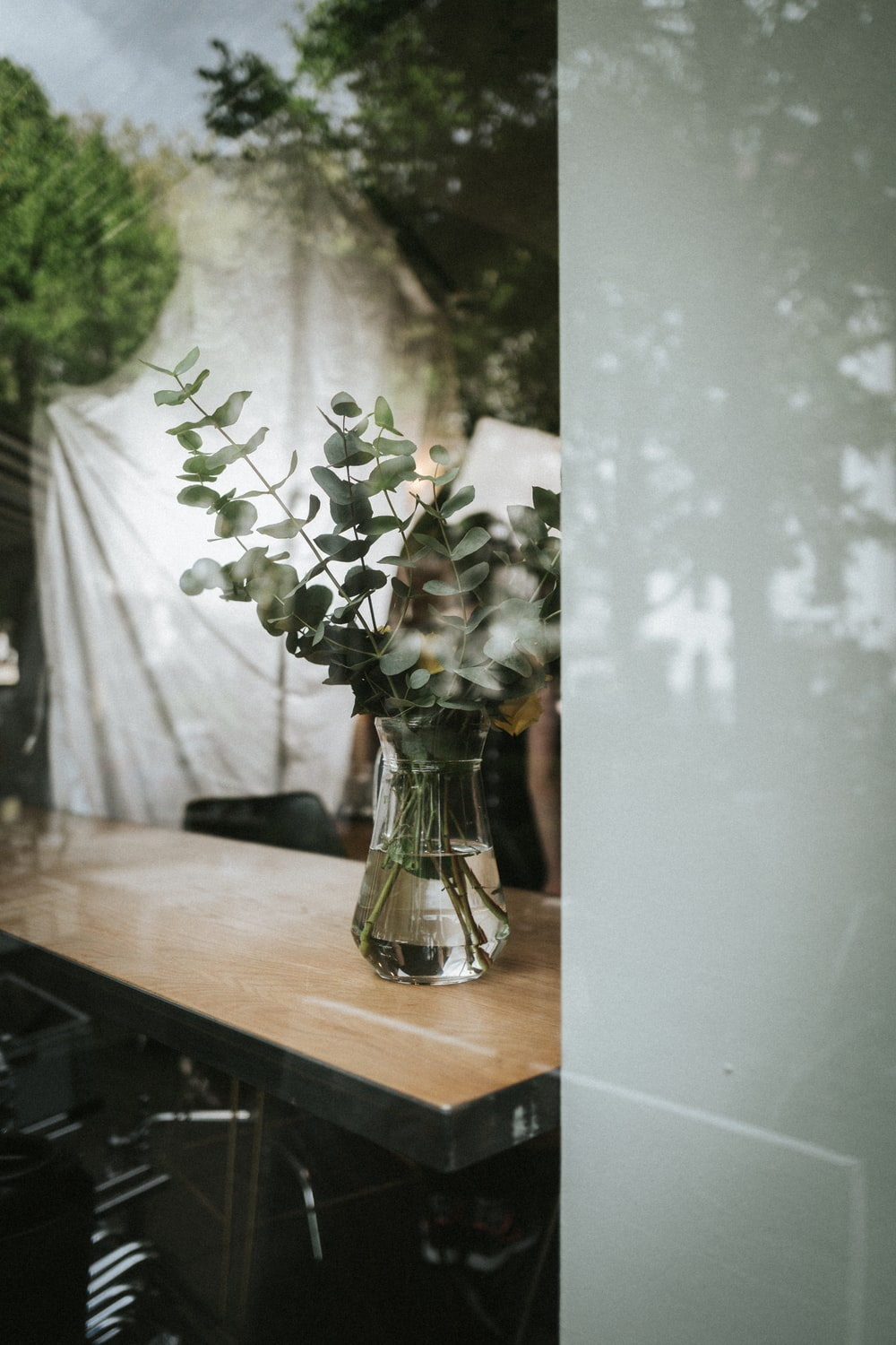 green leaf plant in clear glass vase on wooden surface