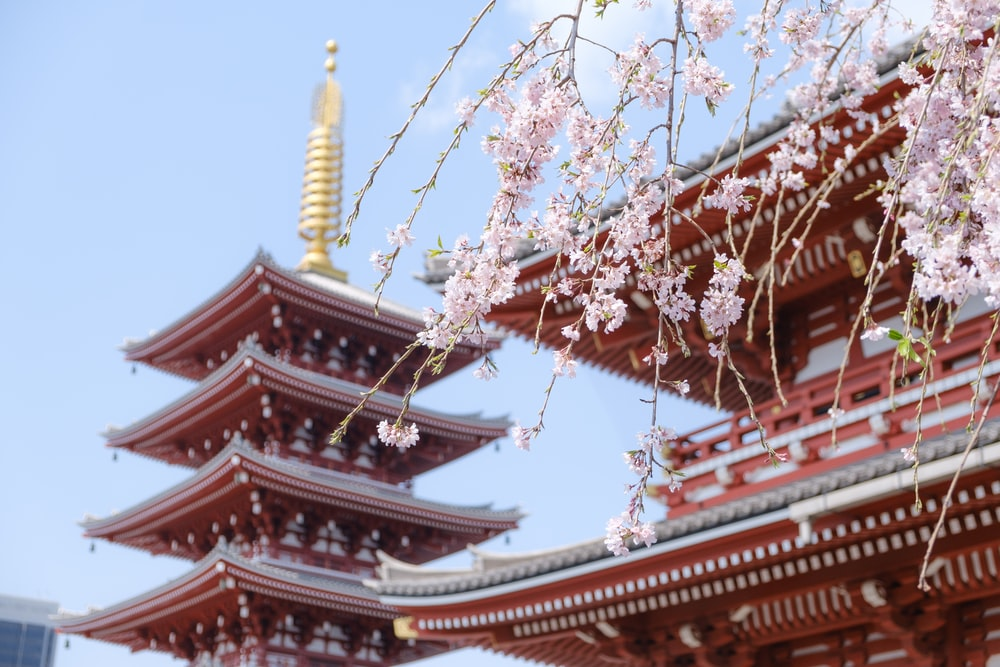 red temple surrounded with pink cherry blossoms