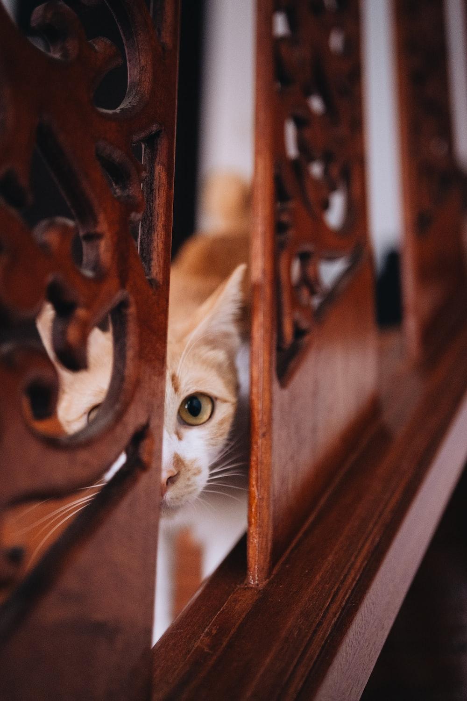 orange cat near wall