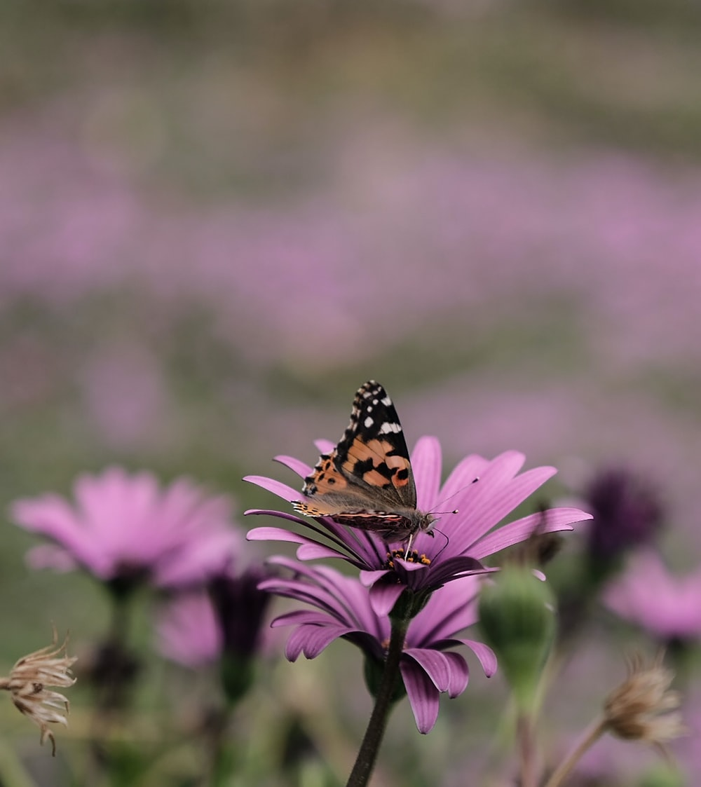shallow focus photo of brown butterfly on purple flower