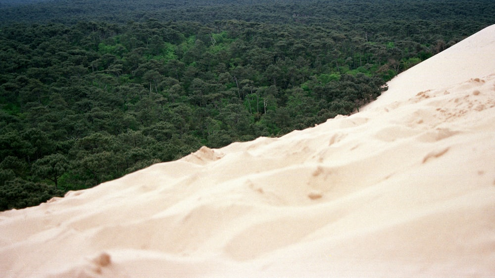 high-angle photography of white sand and green leafed trees