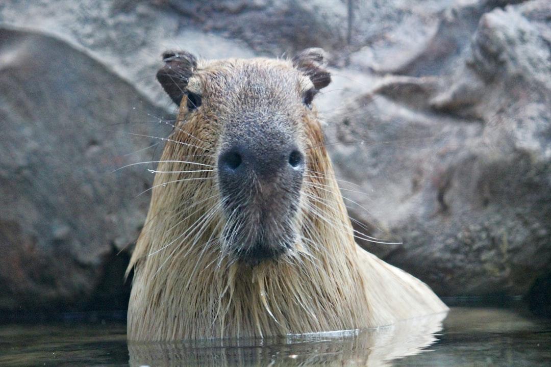 /how-to-integrate-selenium-with-capybara-iq2n30dg feature image