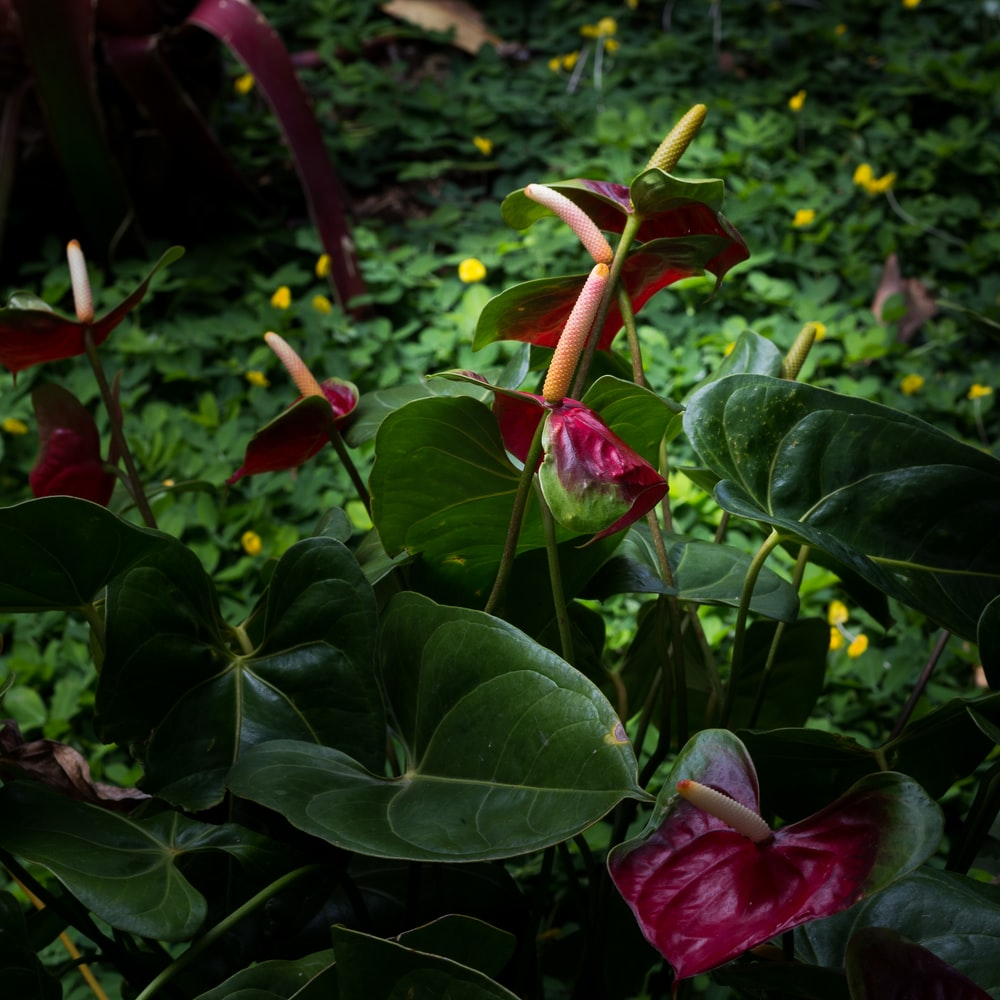 red petaled-flower with leaves