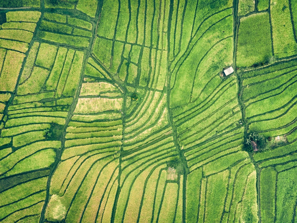 aerial photography of green farm field