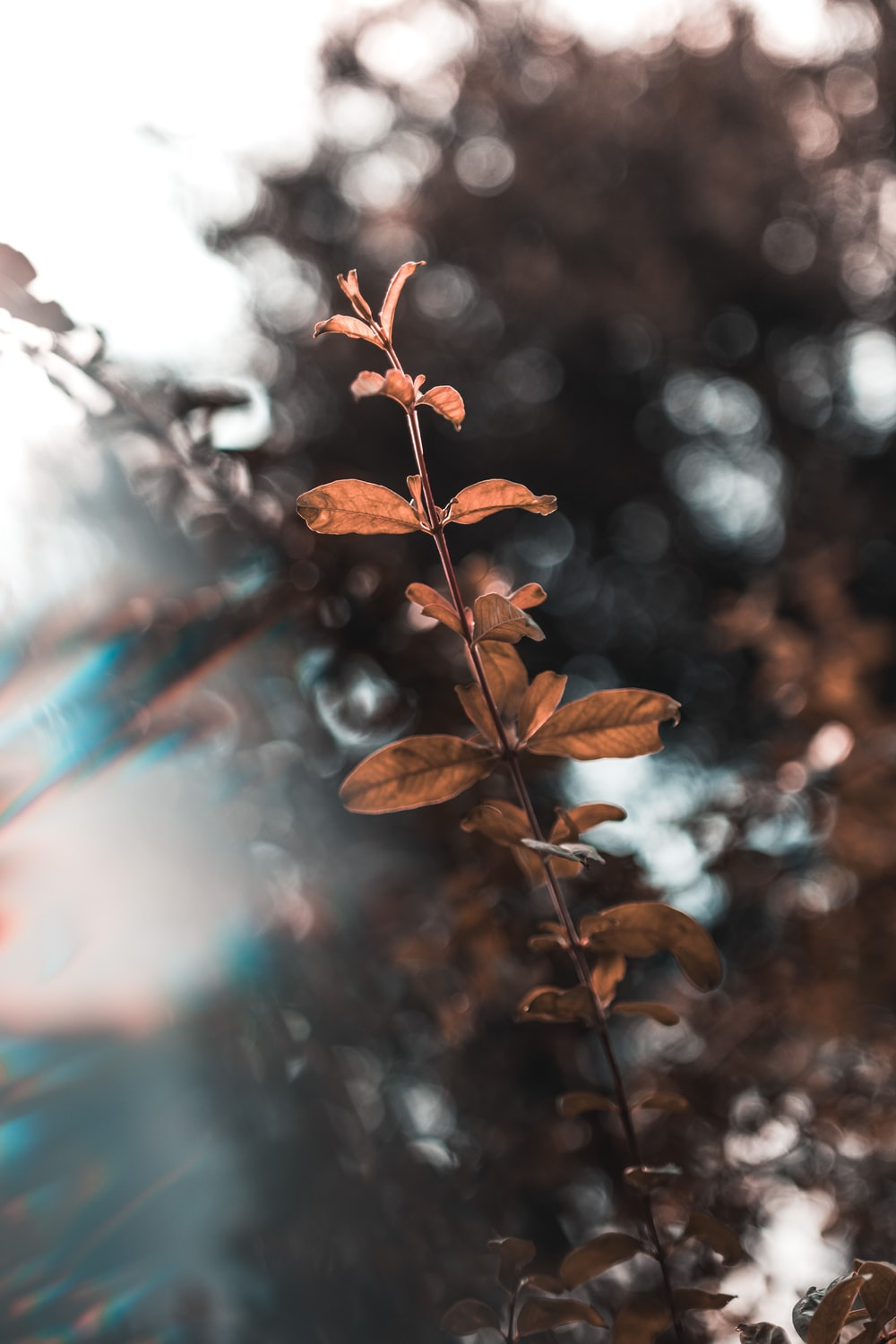 brown plant