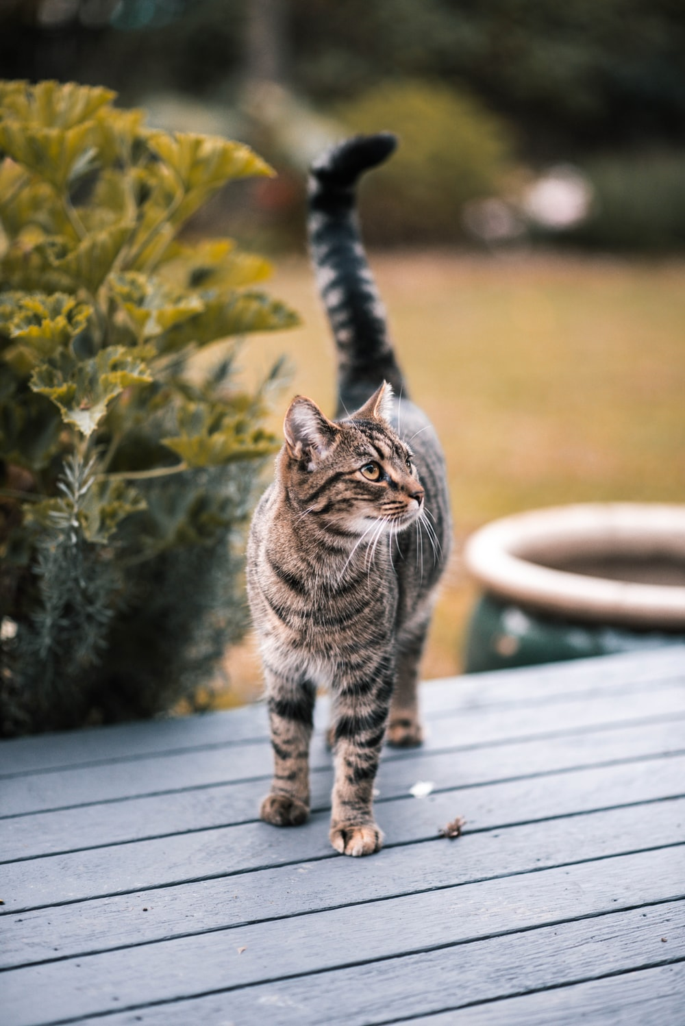 brown tabby cat on table