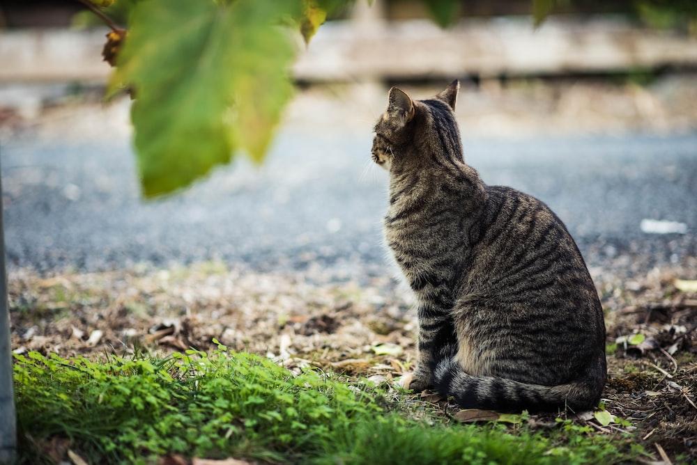 short-fur gray cat beside body of water