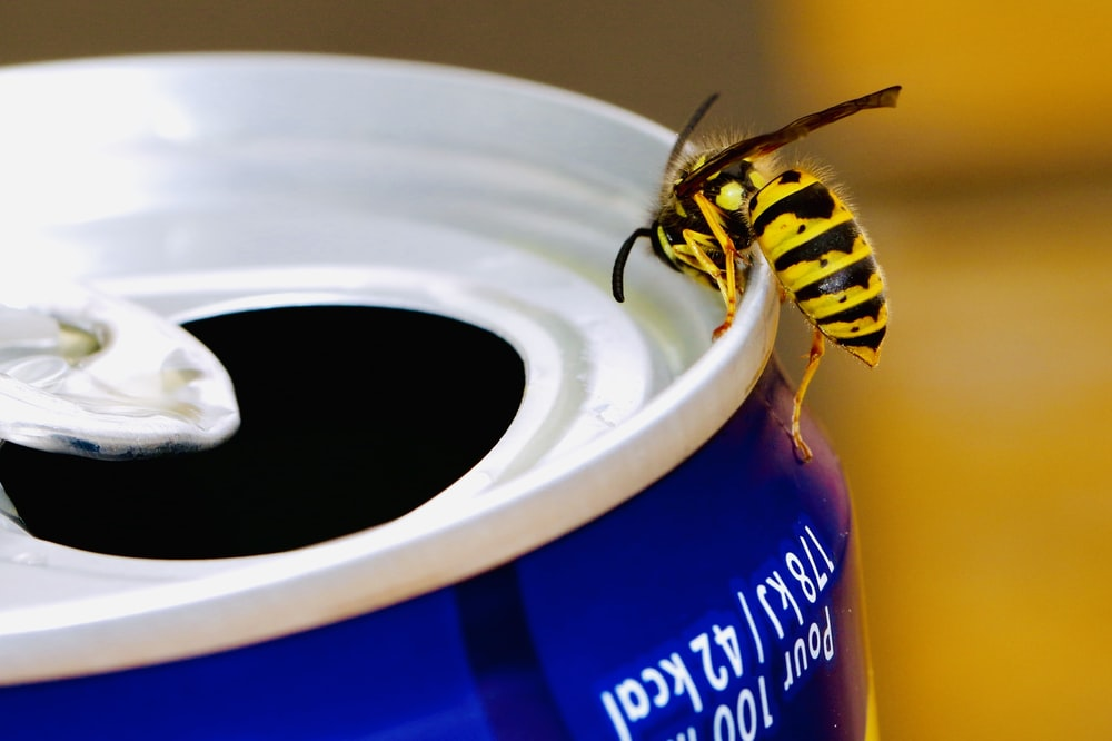 bee on top of tin can