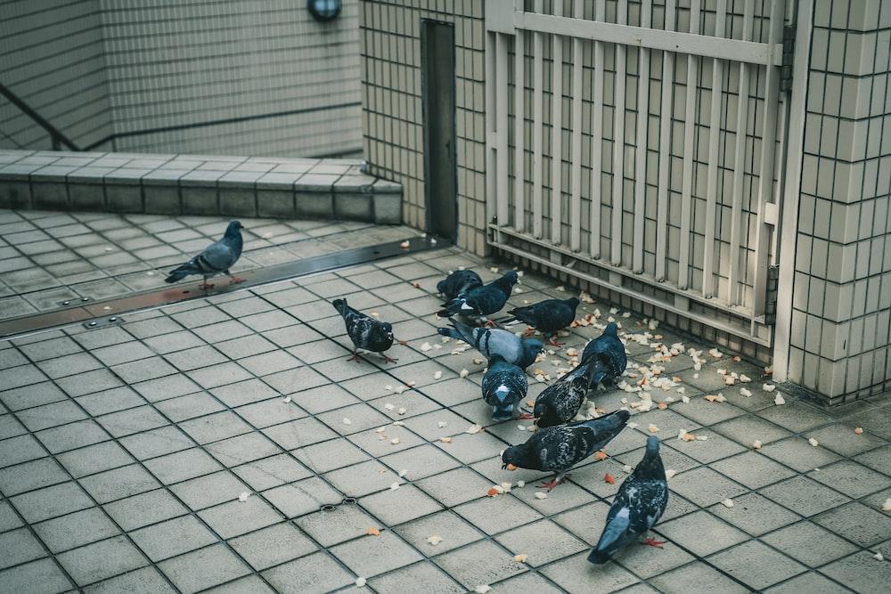 birds eating on tiled floor