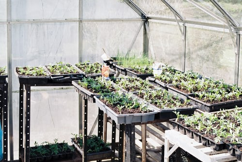 year round greenhouse growing