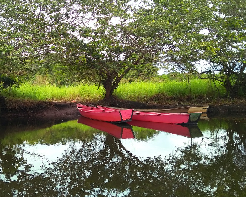 two pink boat docked near trees