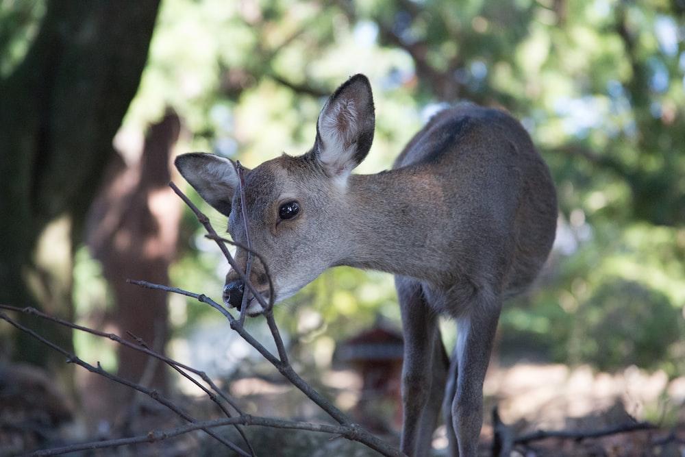 brown deer beside twig