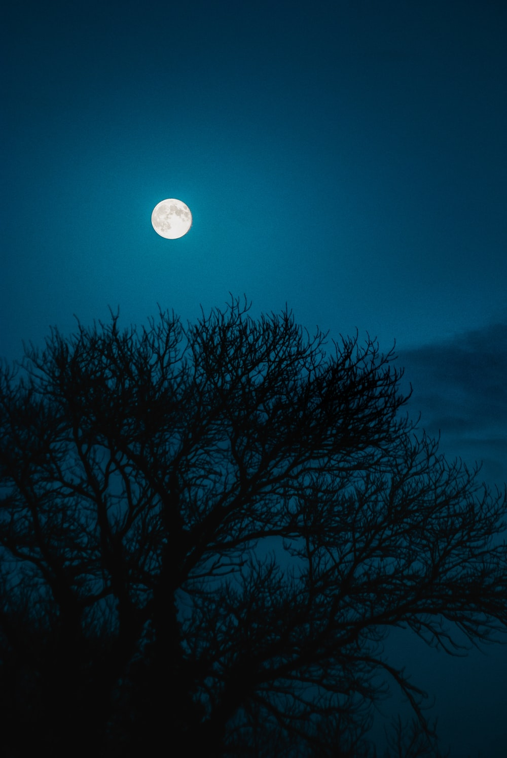 full moon over silhouette of leafless tree