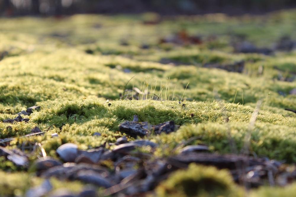 green grass close-up photograph