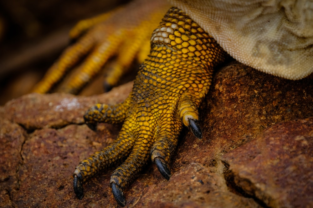 close up photography of lizard's foot