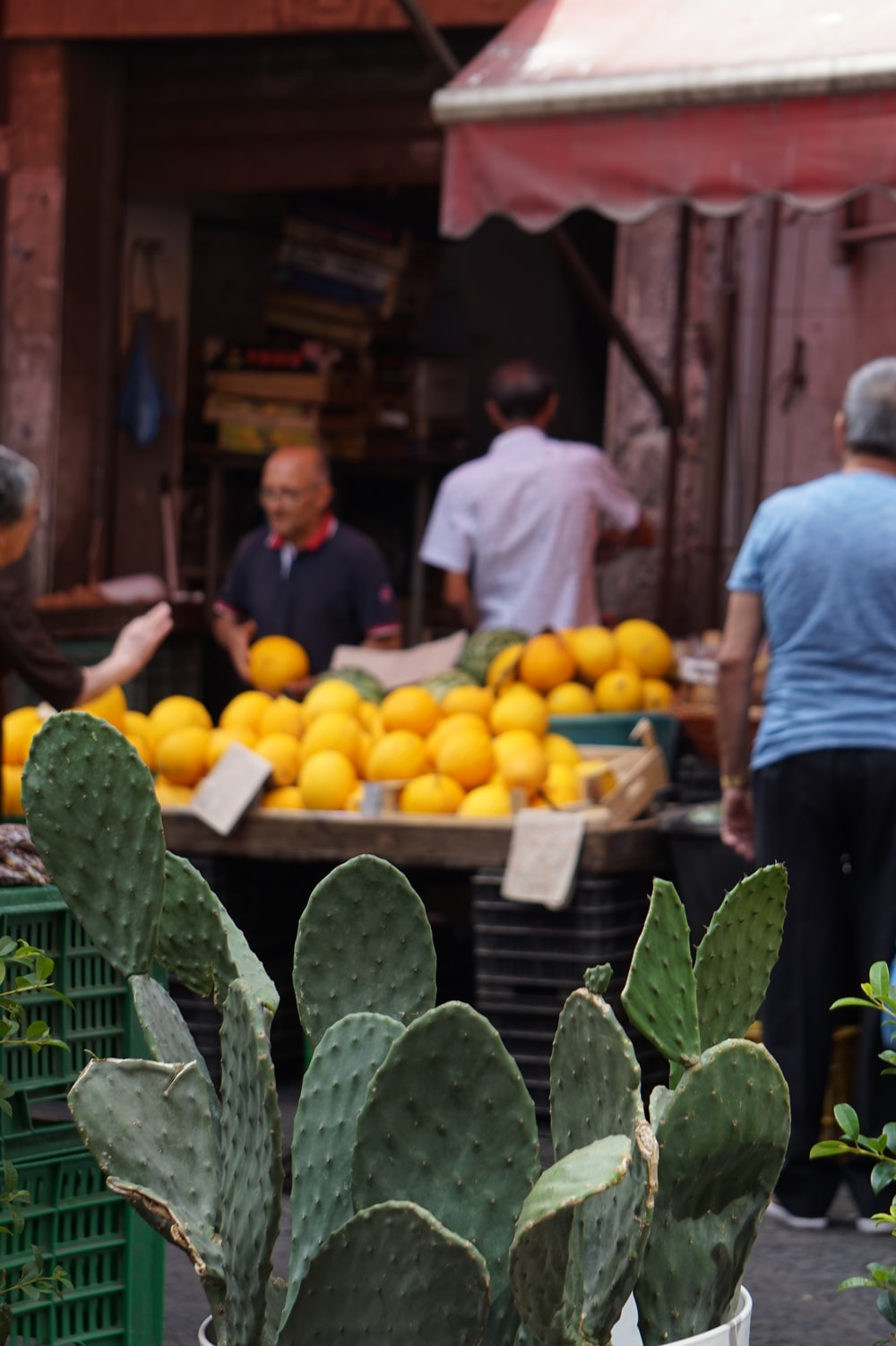 green cacti in the market