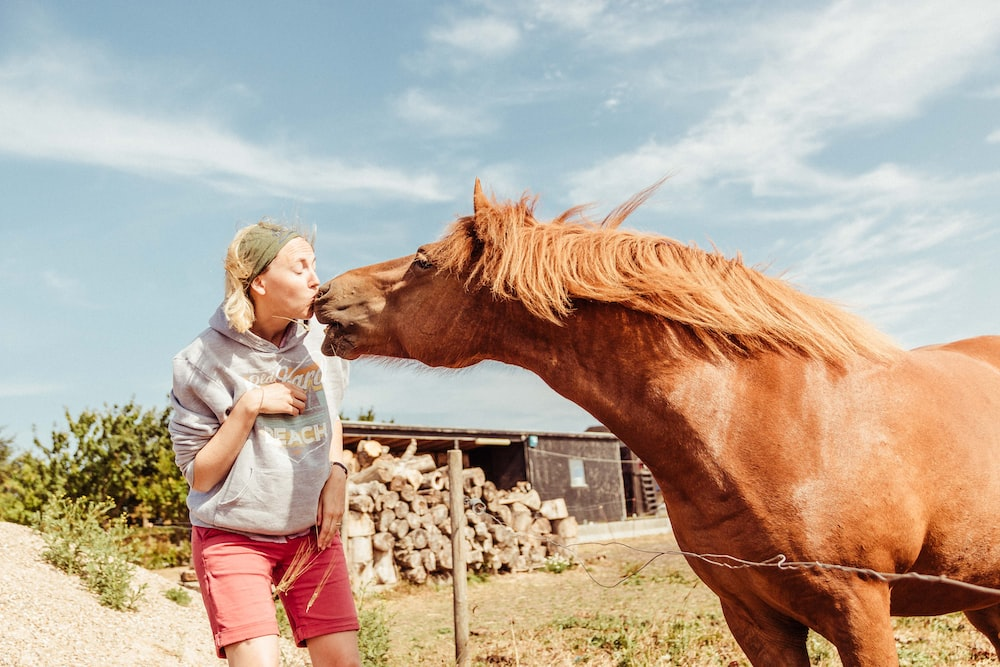 woman kissing brown horse
