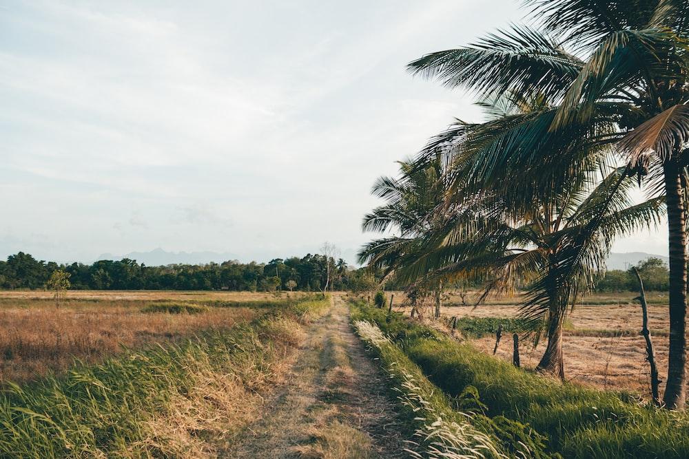 road between rice fields