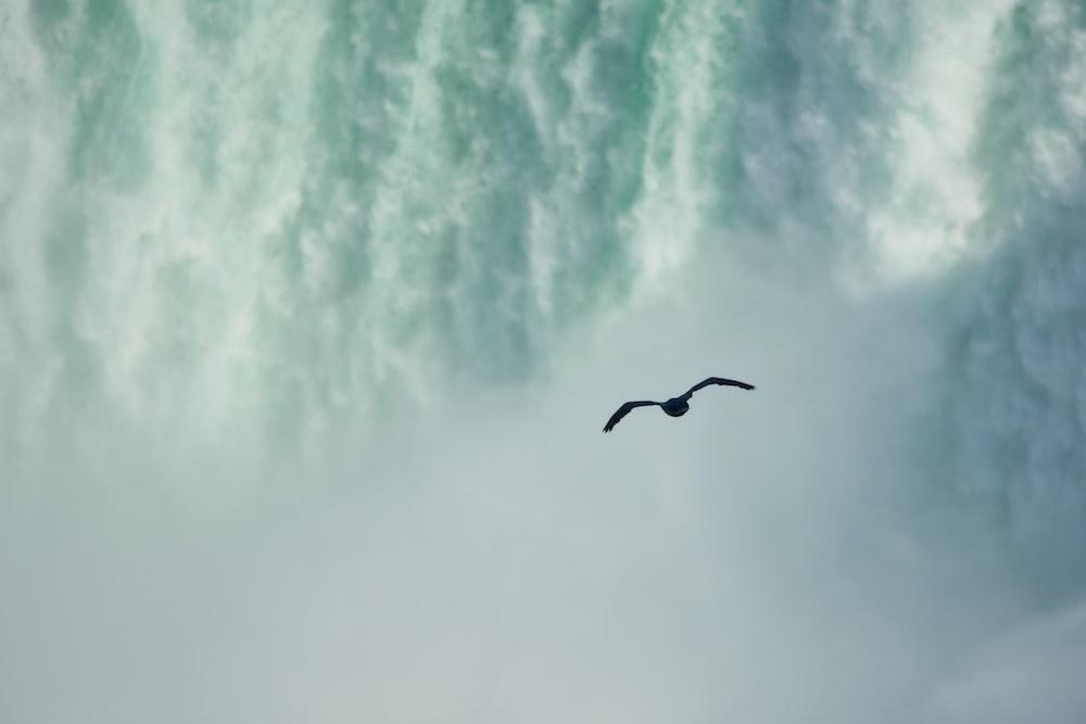 black bird in mid air