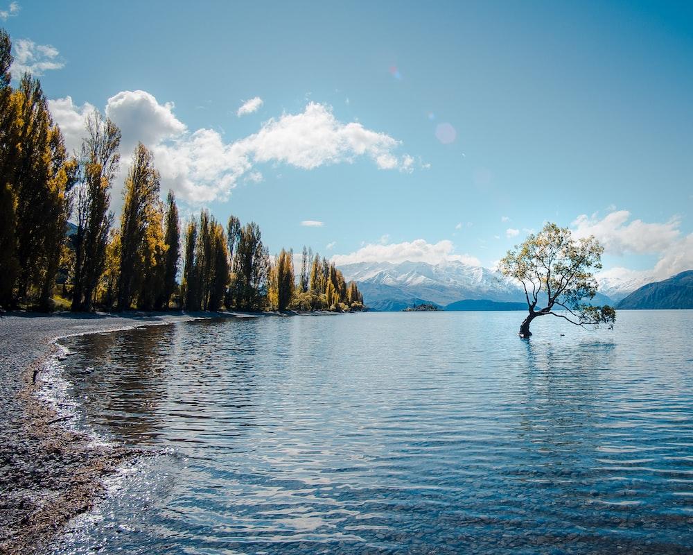 body of water near field of trees
