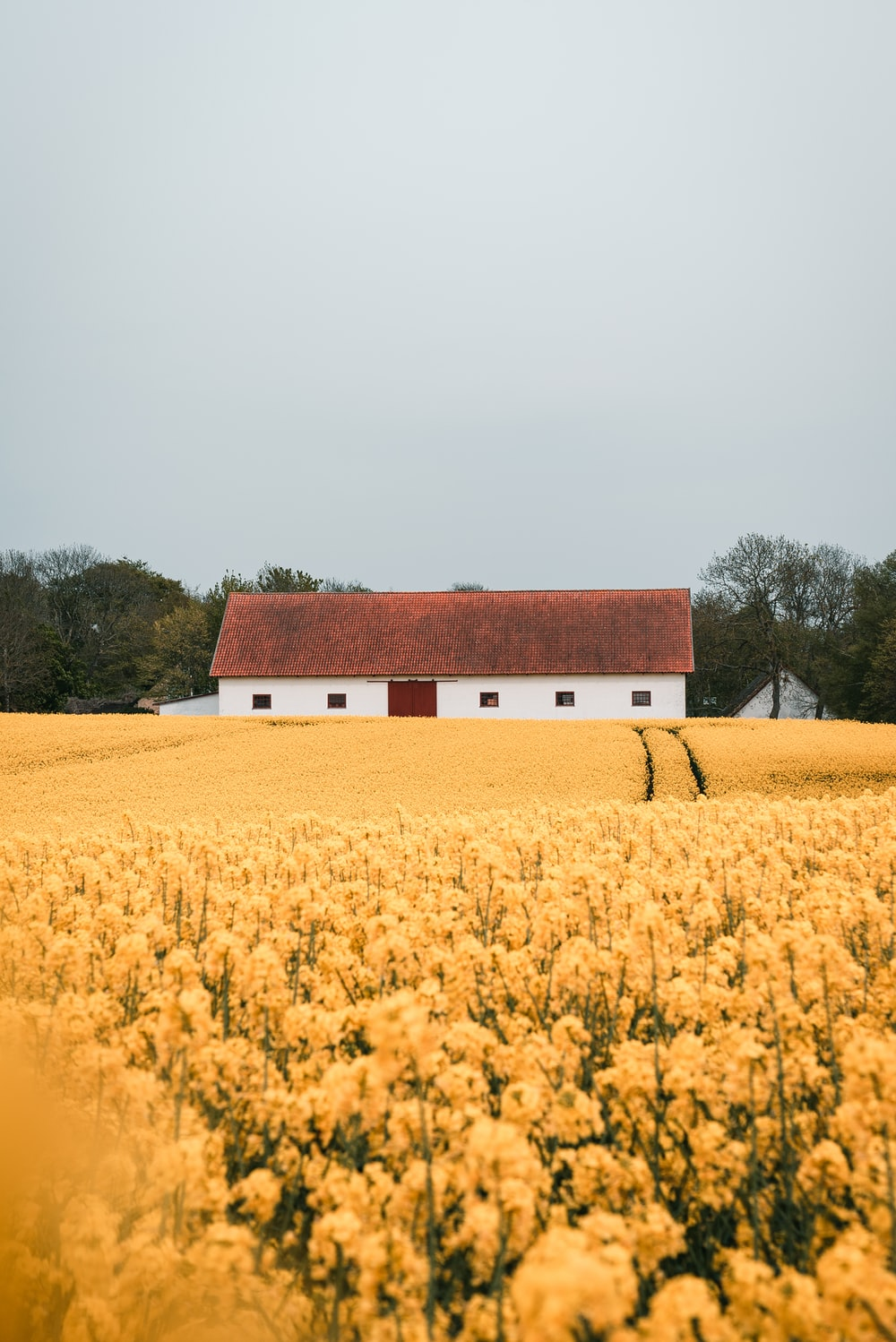 yellow-petaled flower field during daytime