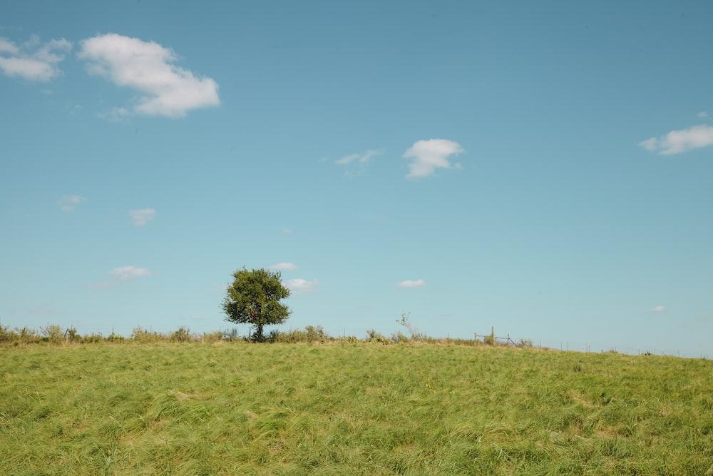 tree near grasses